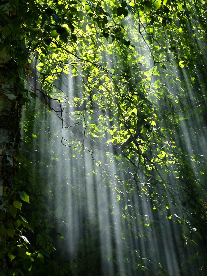 forest-56930_1280