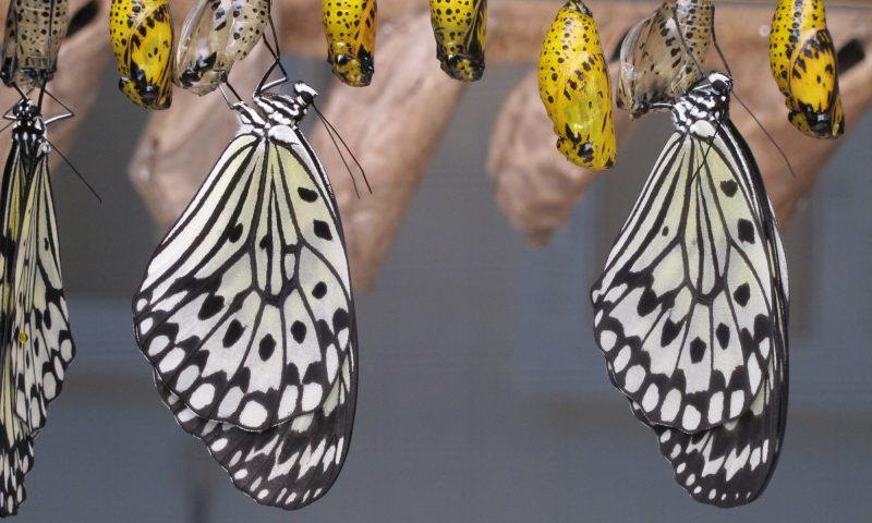 cropped-butterflies-1863444.jpg