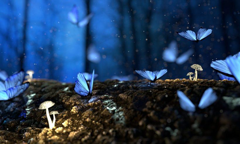 cropped-butterfly-2049567.jpg