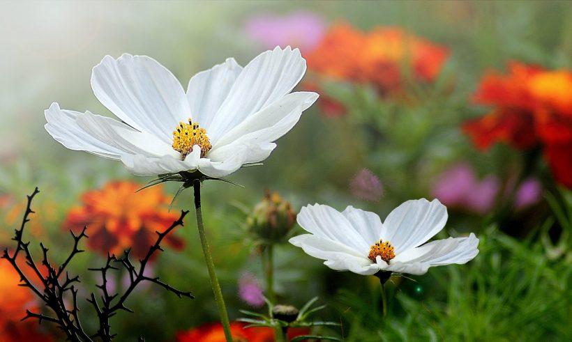 cropped-flowers-2903319_1920.jpg
